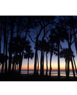 palm trees beach tropical decor wall art photography