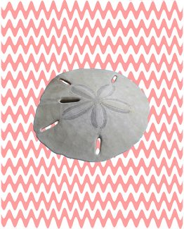ocean nursery bathroom decor art print wall sand dollar seashell nautical beach